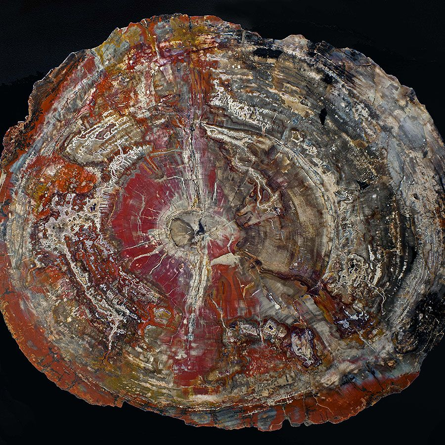 ebonyandco petrified wood pattern