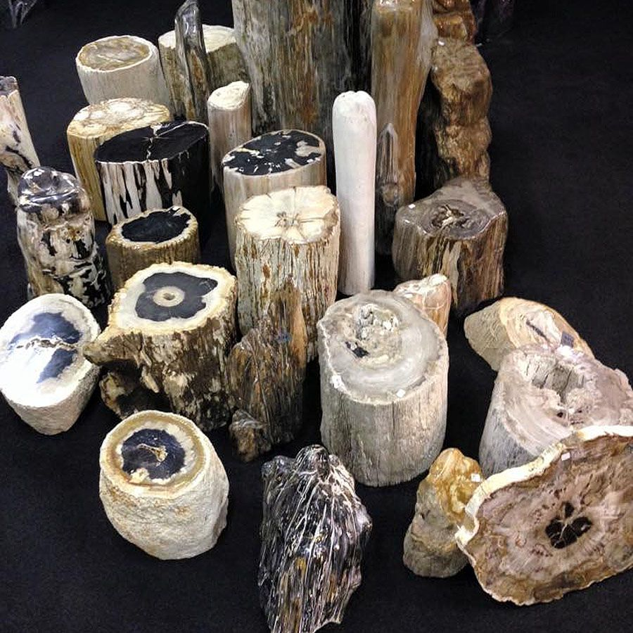 ebonyandco petrified wood small pieces